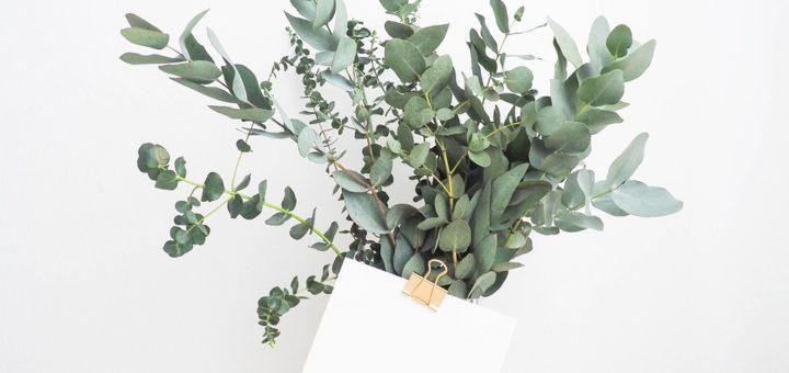 jak eucalyptus zařadit do domácnosti