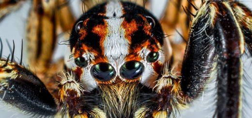 Zajímavosti o pavoucích