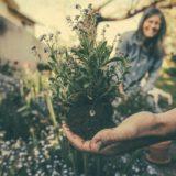 Rostliny na předzahrádku