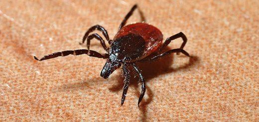 Klíšťata a komáři bez chemie