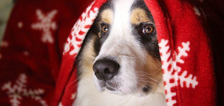 Vánoce a pes