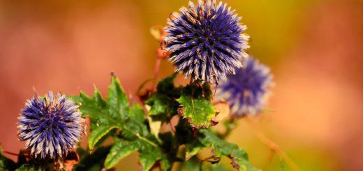 Jaké rostliny vysadit a nezalévat, jelikož milují sucho?