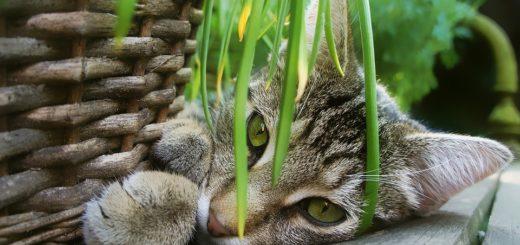 Patříte mezi kočkomily? Pokojové rostliny, které vašim mazlíčkům neublíží